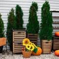 Ящик для сада и дачи
